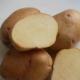 Картофель «Крепыш»: характеристика и процесс выращивания