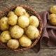 Картофель «Санте»: характеристика и тонкости выращивания