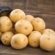 Картофель «Вега»: описание сорта и выращивание