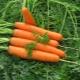 Морковь «Канада F1»: описание и советы по выращиванию