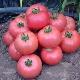 Описание и характеристики сорта томатов «Розовое чудо»