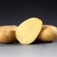 Описание и выращивание картофеля «Рамос»