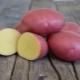 Описание и выращивание сорта картофеля «Лабелла»