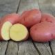 Описание и выращивание сорта картофеля «Розара»