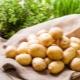 Описание сорта картофеля «Лина»