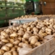 Описание сорта картофеля «Никулинский»