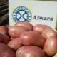 Особенности и технология выращивания сорта картофеля «Альвара»