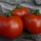 Особенности сорта томатов «Дубок»