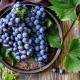 Особенности сортов черного винограда