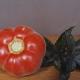 Особенности томатов сорта «Персик»: от плюсов до выращивания