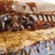 Падевый мед: характеристика и свойства продукта