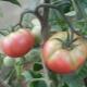 Почему желтеют помидоры в теплице?