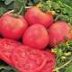 Преимущества и недостатки сорта томатов «Малиновый гигант»