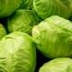 Самые известные сорта капусты