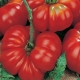 Секреты выращивания томатов «Розмарин»