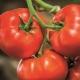 Томат «Биг-Биф F1»: характеристика сорта и агротехника выращивания