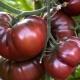 Томат «Черный принц»: описание сорта и тонкости выращивания