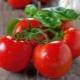 Томат «Красная шапочка»: описание сорта и правила выращивания