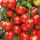 Томат «Марьина роща F1»: характеристика и урожайность сорта