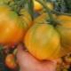 Томат «Оранжевый гигант»: характеристика и описание сорта