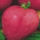 Томат «Розовое сердце»: описание и характеристика сорта