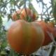 Томат «Шапка Мономаха»: описание сорта и правила выращивания