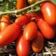 Томаты «Ракета»: описание, выращивание и урожайность