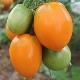 Томаты сорта «Южный загар»: характеристика, урожайность и выращивание