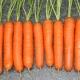 Тонкости процесса выращивания моркови «Тушон»