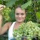 Виноград «Краса Севера»: характеристика и особенности посадки
