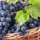 Виноград «Мукузани»: характеристика растения и уход