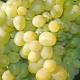 Виноград «Супер Экстра»: особенности и выращивание