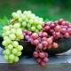Всё о винограде: какой бывает, чем полезен и где применяется?