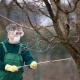 Чем обрабатывать сливу от болезней и вредителей?