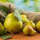 Груша «Богатая»: описание и выращивание сорта
