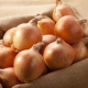 Характеристика и выращивание сорта лука «Стригуновский»