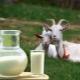 Как кипятить козье молоко и для чего это нужно?