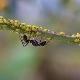 Как навсегда избавиться от муравьёв на смородине?