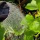 Как поливать огурцы?
