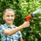 Как правильно поливать яблони летом?