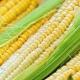 Как правильно заморозить кукурузу?