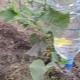 Как сделать капельный полив из пластиковых бутылок для огурцов?