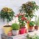 Как вырастить декоративный перец?