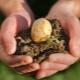 Какие удобрения нужно вносить при посадке картофеля?