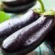 Калорийность баклажанов и их пищевая ценность