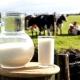 Коровье молоко: польза и вред для здоровья человека, рекомендации по употреблению