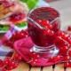 Лучшие рецепты заготовок из красной смородины на зиму