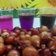 Особенности процесса обработки лука перед посадкой марганцовкой и солью