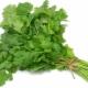 Особенности выращивания кинзы из семян