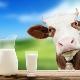 Пастеризованное молоко: что это такое и как его хранить, польза и вред продукта